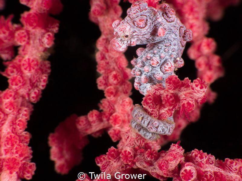 Pinky! by Twila Grower
