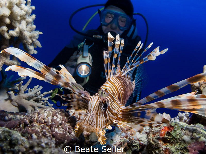 Lionfish with my Buddy in the back by Beate Seiler