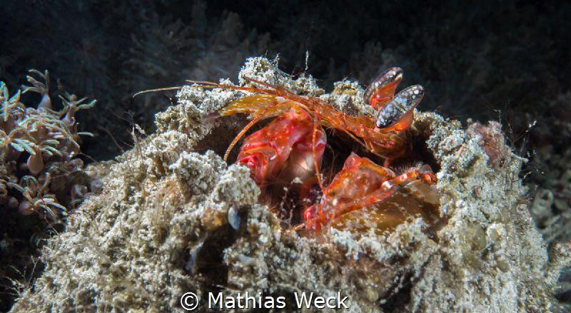 Shrimp by Mathias Weck