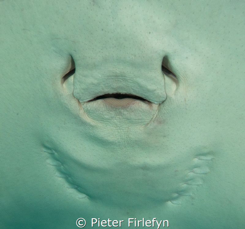 Ray mouth by Pieter Firlefyn