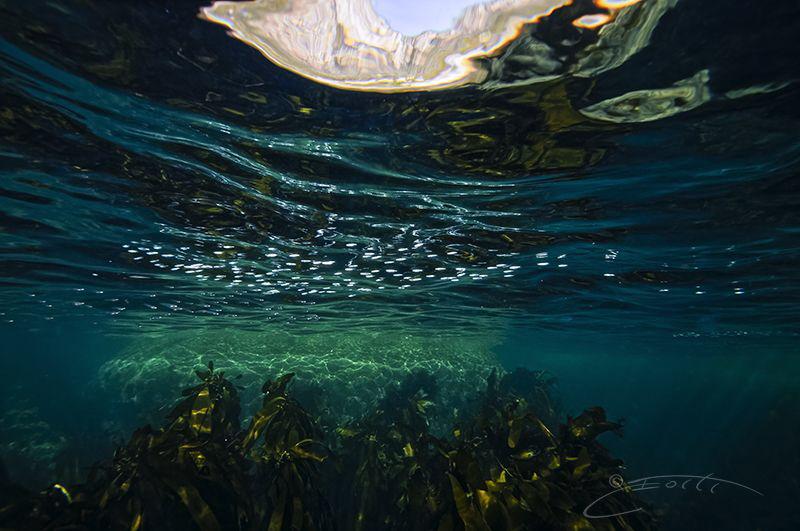 ~ SEAL ~ by Geo Cloete