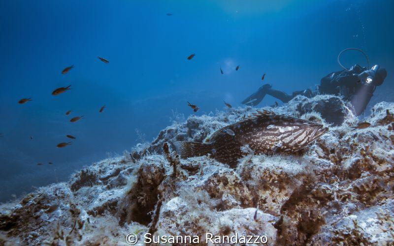 Mediterranean grouper by Susanna Randazzo