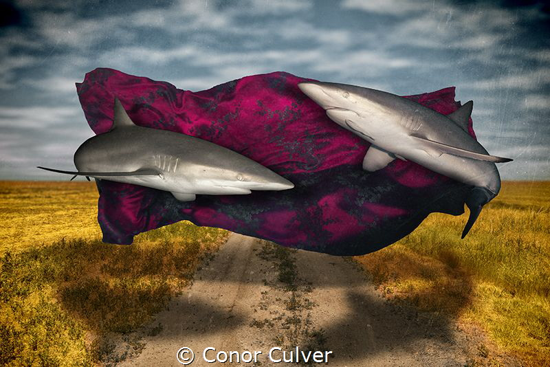 """""""Silk Road"""" part of my Underwater Surrealism body of work... by Conor Culver"""