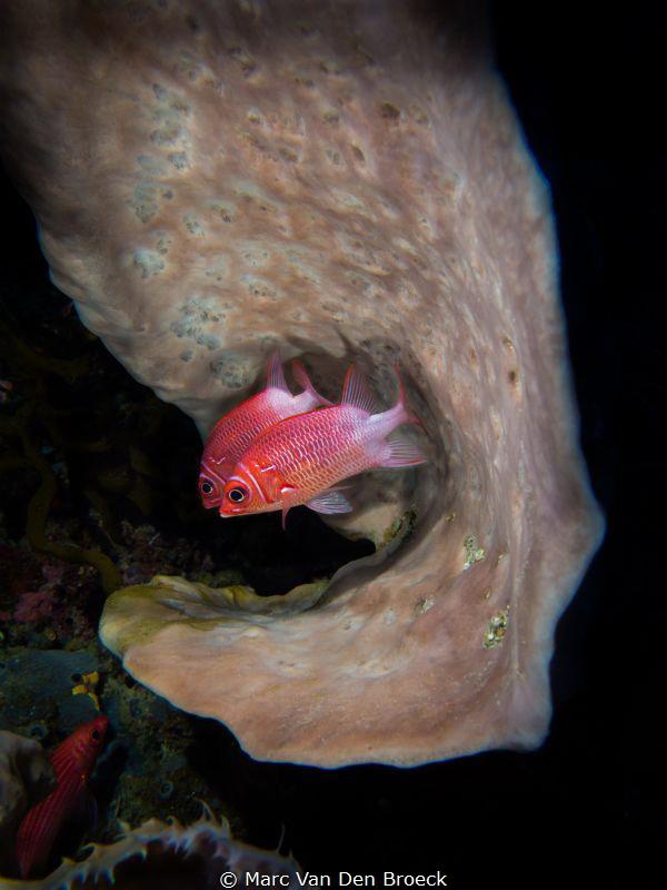 ear fish by Marc Van Den Broeck