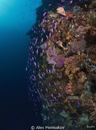 Reefscape of Pungtod divesite. by Alex Permiakov