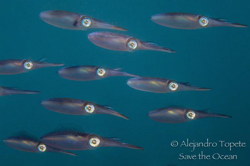 Squid family, Veracruz México by Alejandro Topete