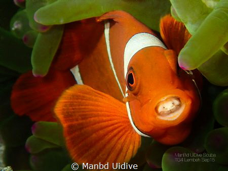 FINDING PARASITE