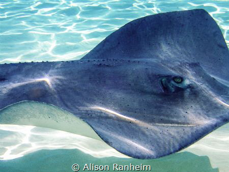 Who's looking at who? by Alison Ranheim
