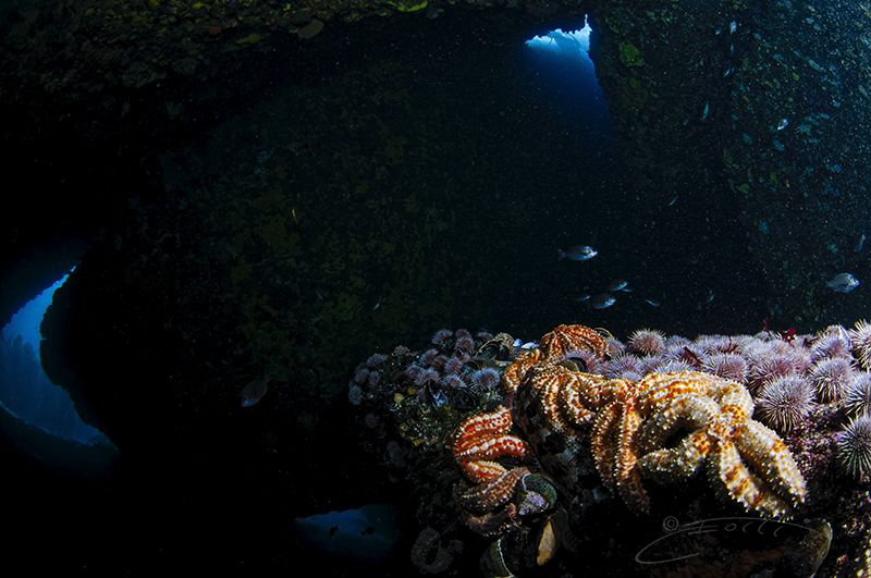 ~ Treasure Cove ~ by Geo Cloete