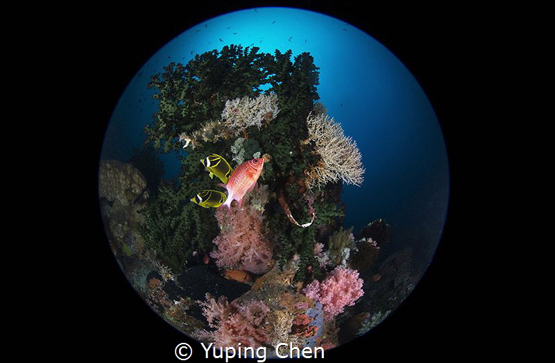 Reefscapes/Lembeh strait, Indonesia, Canon 5D MarkIII, 8-... by Yuping Chen