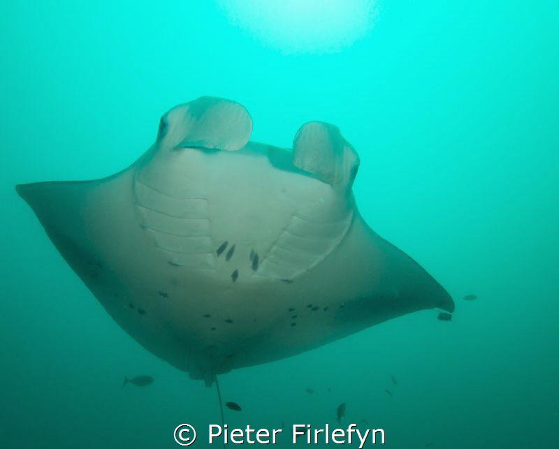 Manta ray by Pieter Firlefyn