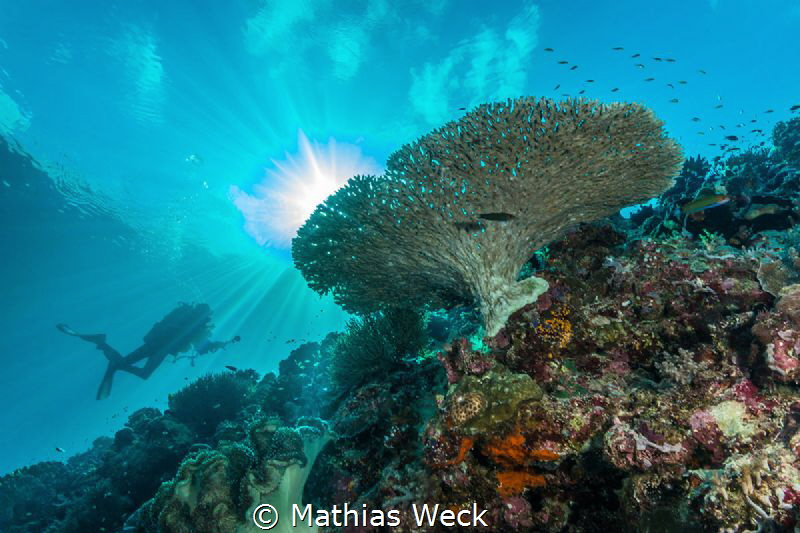 Reef with diver at Tubbataha by Mathias Weck