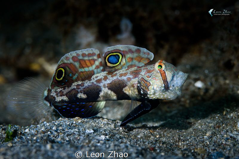 signal goby yawn~ by Leon Zhao