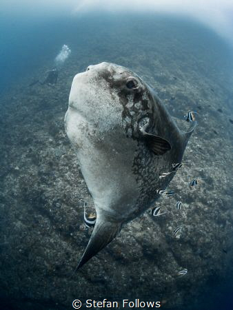 Blue Steel