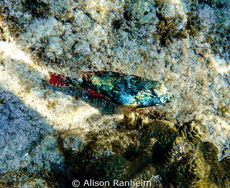 West Bay, Roatan by Alison Ranheim
