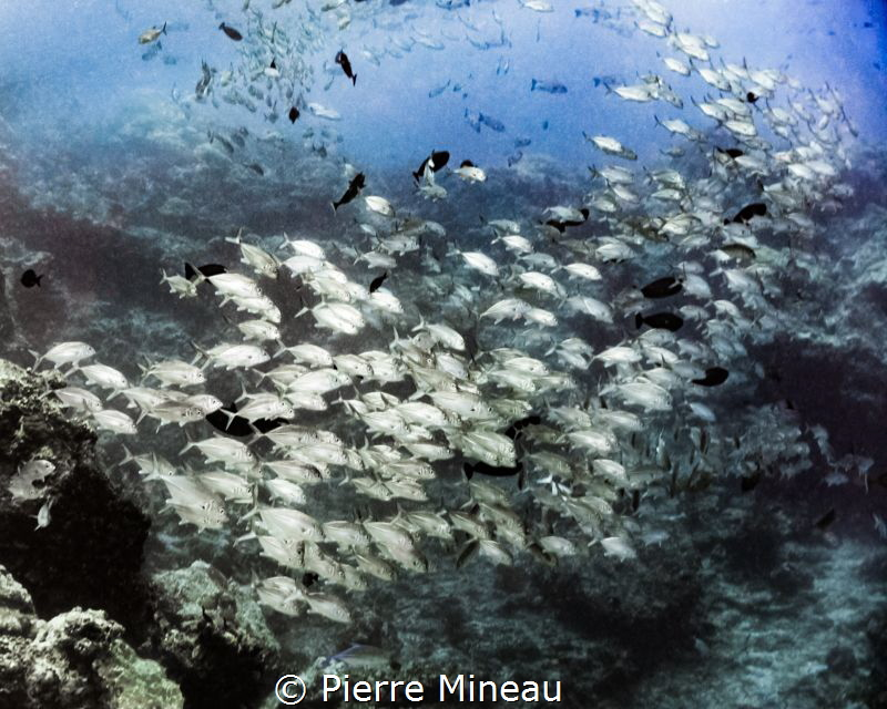 School is in!  I used the milky conditions and swirling p... by Pierre Mineau