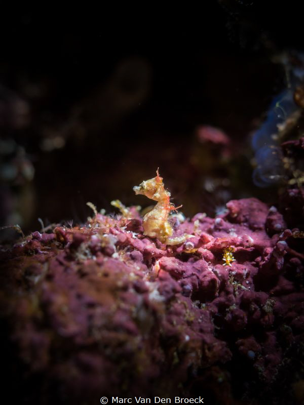 where is the nudi (2mm) by Marc Van Den Broeck