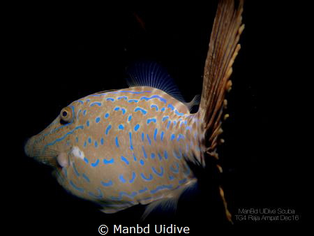 FILEFISH