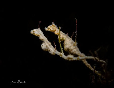 SOUL MATE...