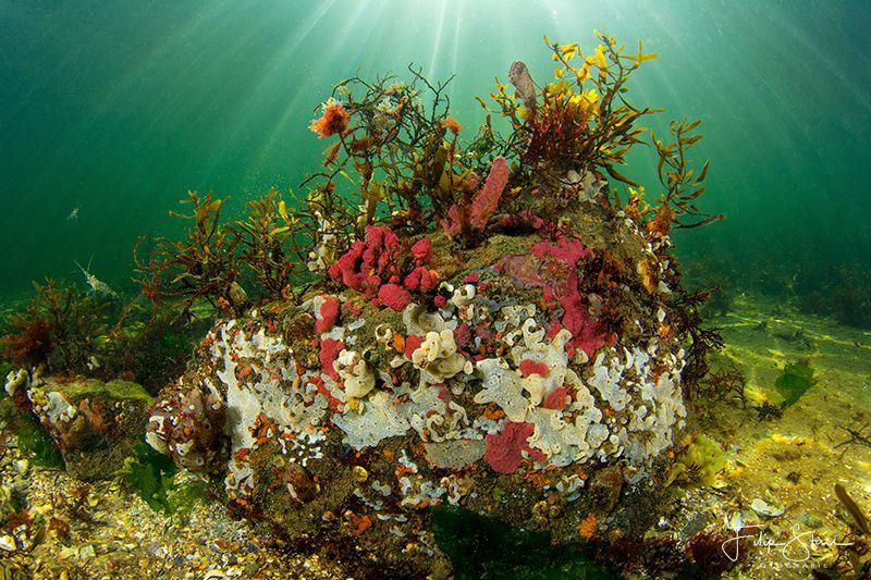 Underwater landscape of lake Grevelingen, Zeeland, The Ne... by Filip Staes