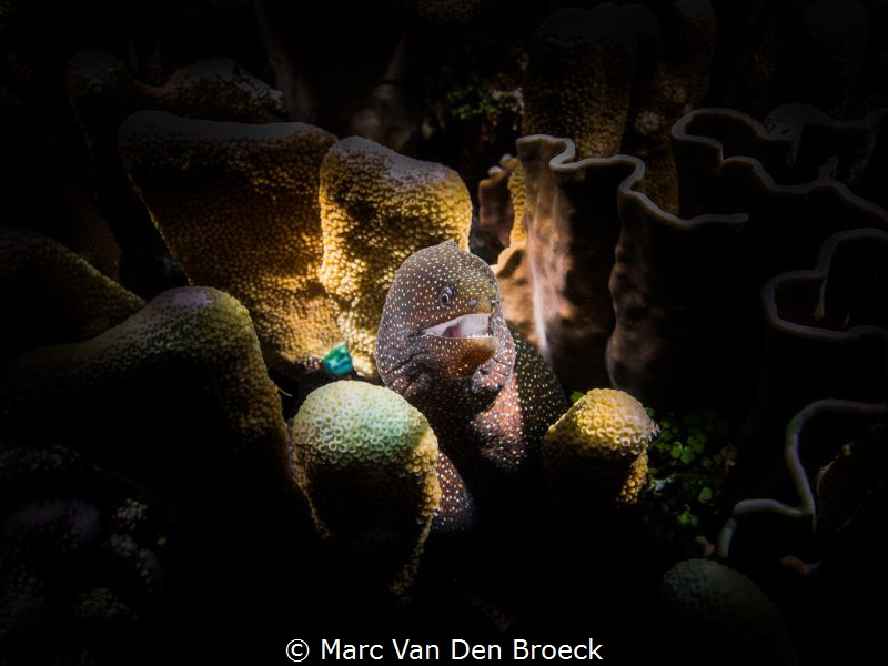 White mouth by Marc Van Den Broeck