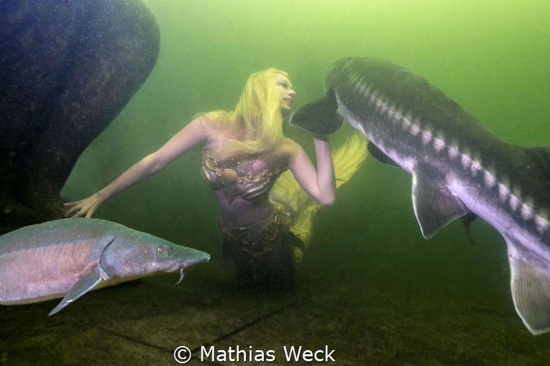 "Mermaid Daniela Rodler in artificial lake ""Natura Gart"" i... by Mathias Weck"