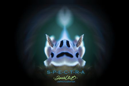 SPECTRA by Ipah Uid