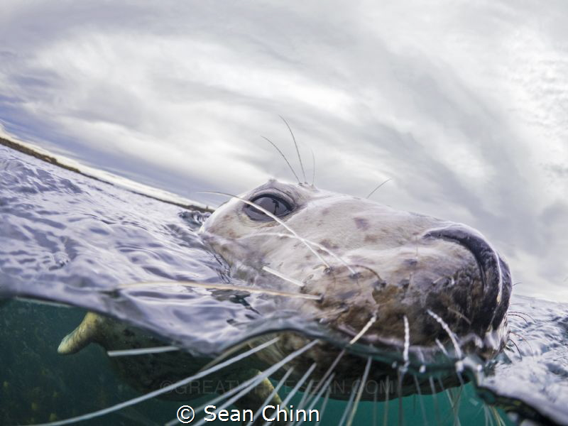 Split Seal by Sean Chinn
