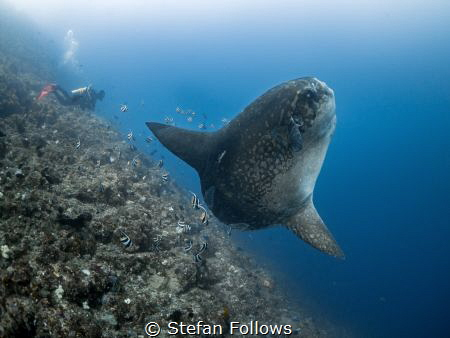 If you insist!