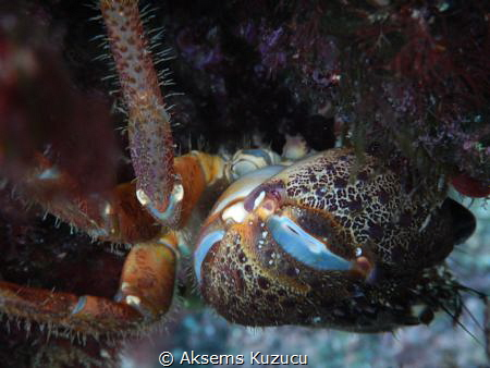 Crab caught in a narrow hollow cannot go further by Aksems Kuzucu