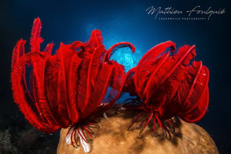 Bangka marine life by Mathieu Foulquié