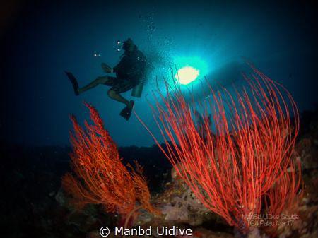 PALAU Fish 'n Fins by Manbd Uidive