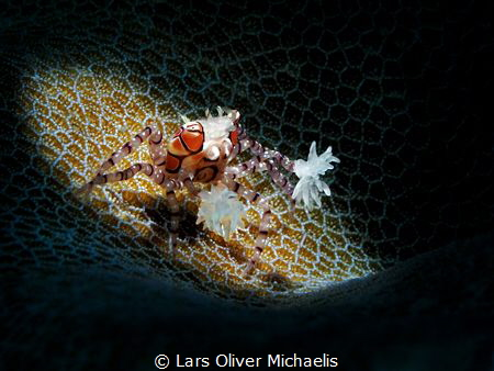 dancing in the spotlight by Lars Oliver Michaelis