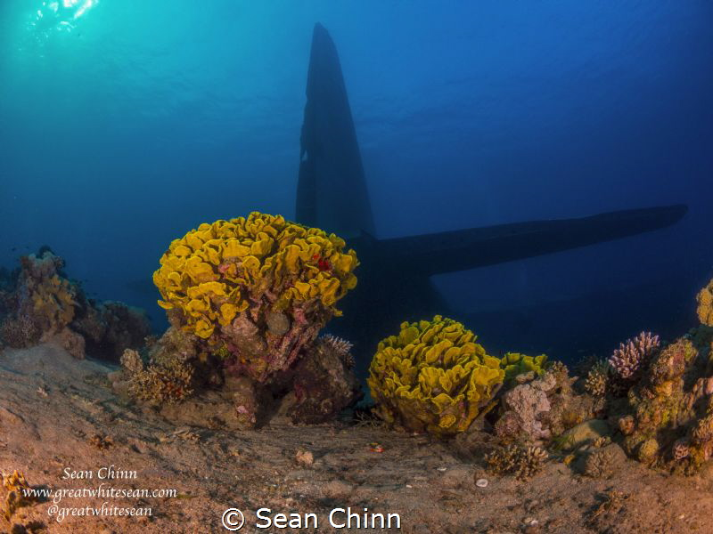 C-130 tail fin. Brand new wreck site in Aqaba the C-130 H... by Sean Chinn