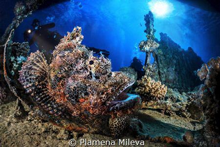 Underwater monster by Plamena Mileva