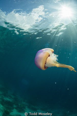 Jellyfish by Todd Moseley