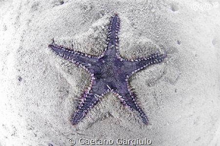 starfish sinking in sand by Gaetano Gargiulo