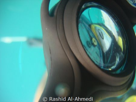 Very random at safety stop but looks nice by Rashid Al-Ahmedi