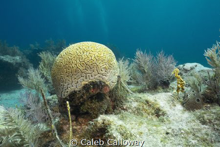 This image is an illustration on the coral bleaching on t... by Caleb Calloway