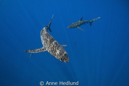 The silkies surrounded our boat between dives, with the s... by Anne Hedlund