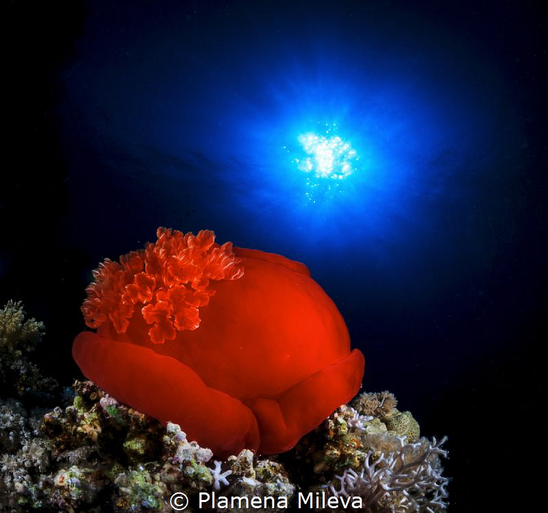 Red flowers by Plamena Mileva