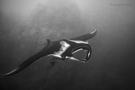 Diving Roca Partida of the Socorro group in Mexico with g... by Brian Burnett