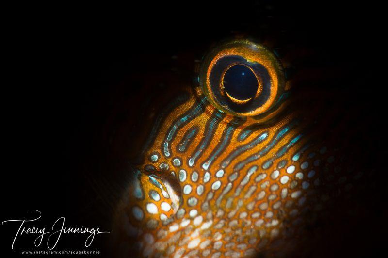 Toby eye by Tracey Jennings