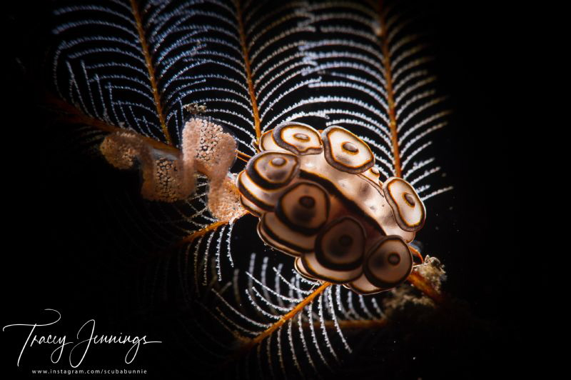 Bali doto with backlight by Tracey Jennings