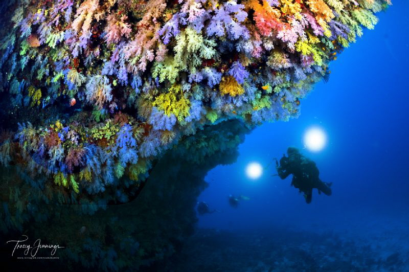 Checking out the soft coral by Tracey Jennings