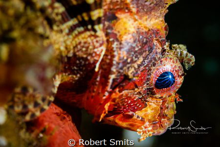 Lightning in the eye of the scorpionfish.  Did you know s... by Robert Smits