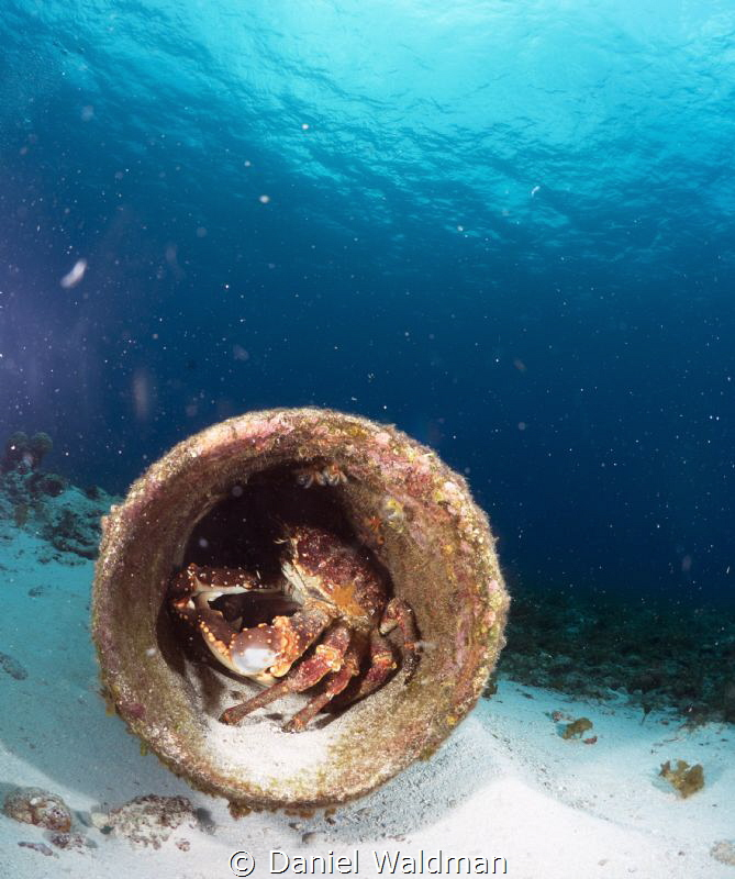 Crab home out in Cozumel by Daniel Waldman