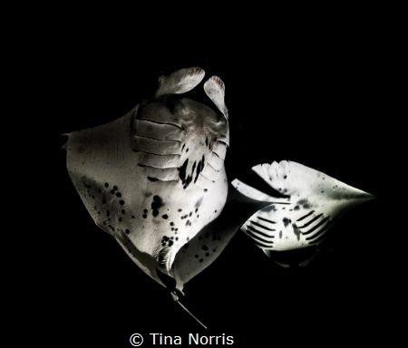 Mantas feeding on plankton... by Tina Norris