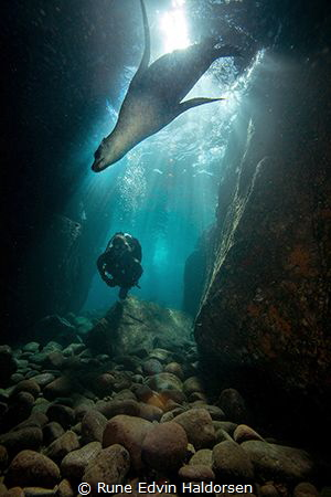 A california sea lion from Los Islotes by Rune Edvin Haldorsen