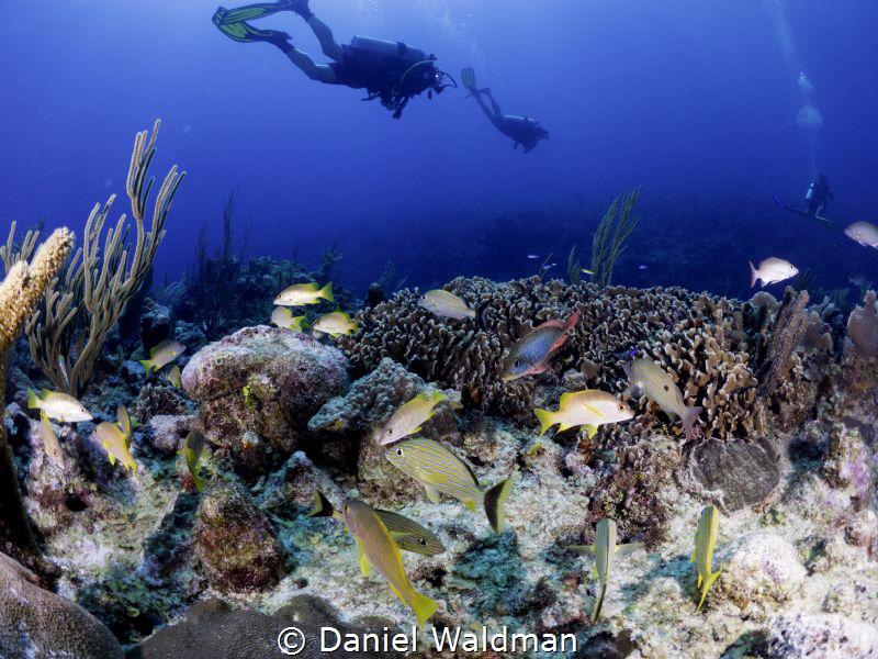 Esmeralda Reef by Daniel Waldman